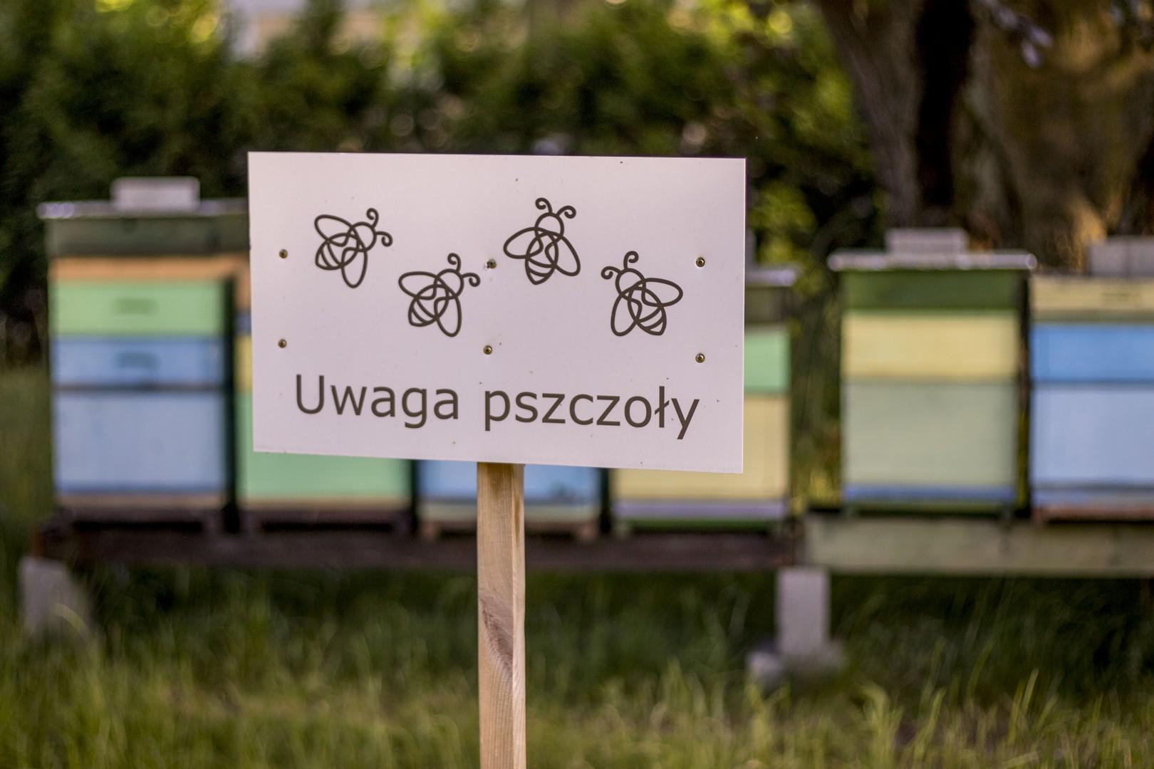 Wasowo Palac 035